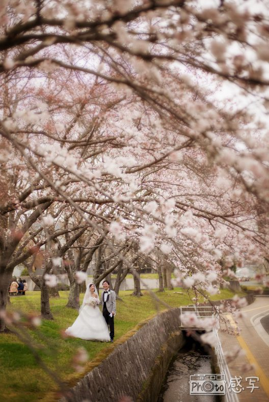 gold location photo 前撮り ロケーション 写真 桜